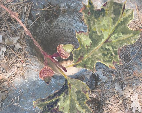 acornsbedrock-mortor.jpg
