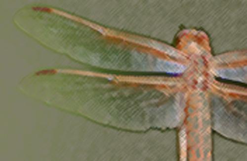 altdragonfly2.jpg