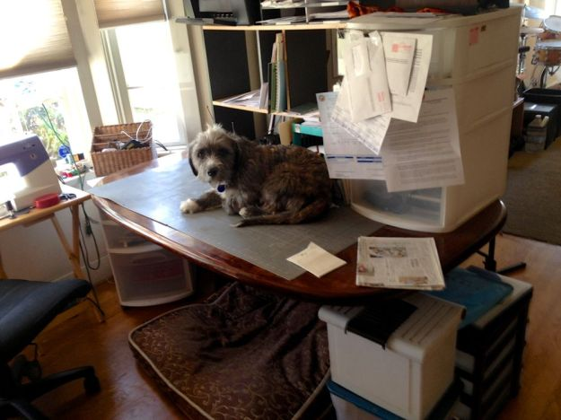 and buddy, the new pup stayed on top of things in the office while i was gone.