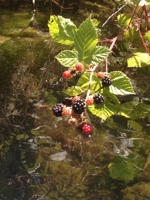 ate berries from the canoe