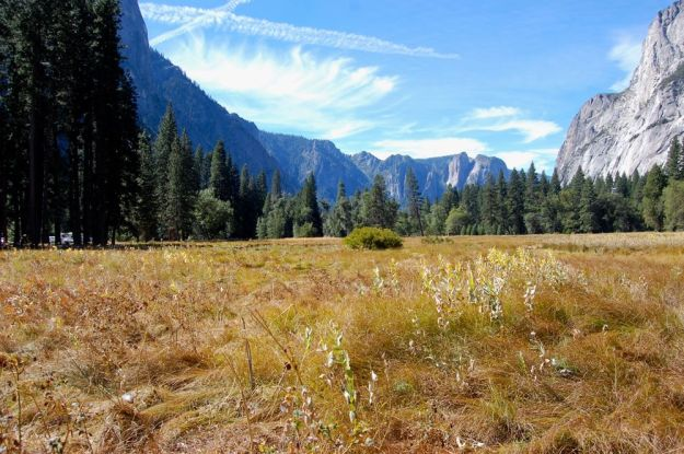 Yosemite meadow-the Native Americans kept this area free from trees and saplings, it is now filled with trees that encroach on the meadow where materials and acorns were once gathered.
