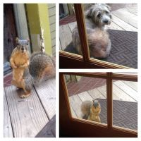 """SG and Buddy play """"Dog and Squirrel"""""""