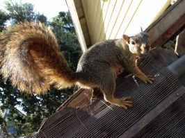 Nuts! I must have Nuts!