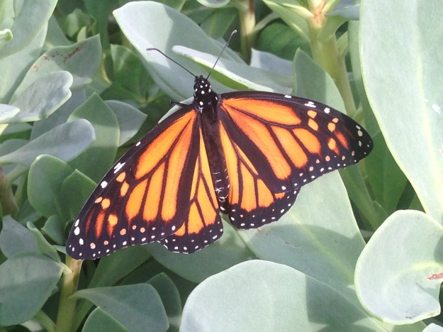newly emerged before the storm